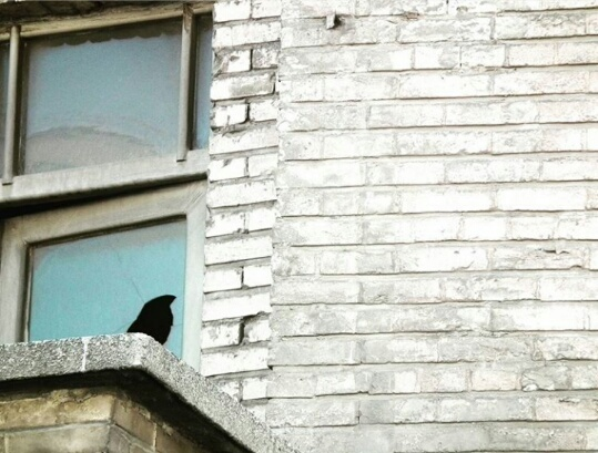Crow on the edge