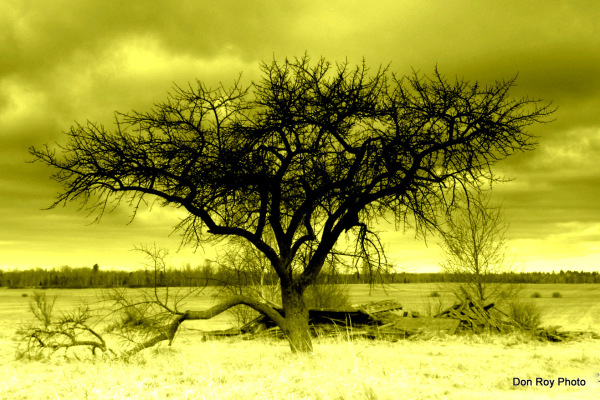 A Tree Stands Alone