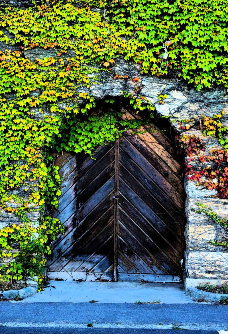 Ivy covered door at UCT