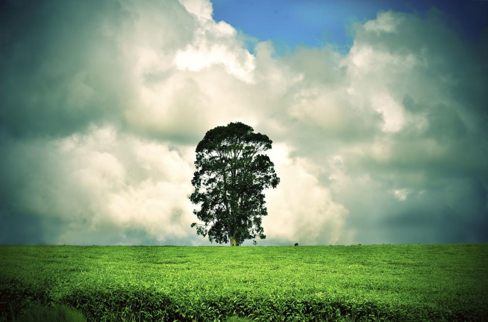 Magwa Tea Plantation Wild Coast South Africa