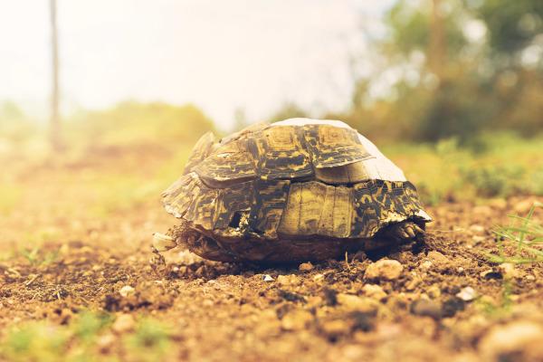 Dead Tortoise on Mountain outside Hankey