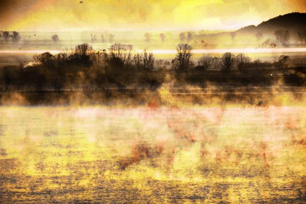 Fog on the morning river
