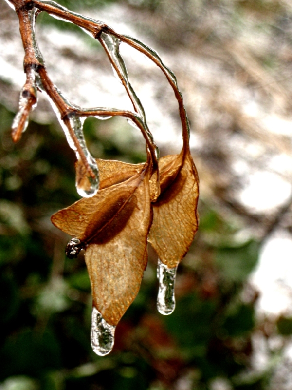 Remnants of an ice storm