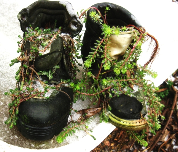 Garden Boots ...the series
