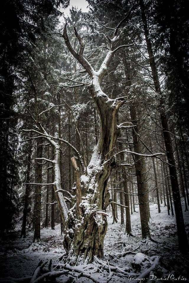 the witch's tree