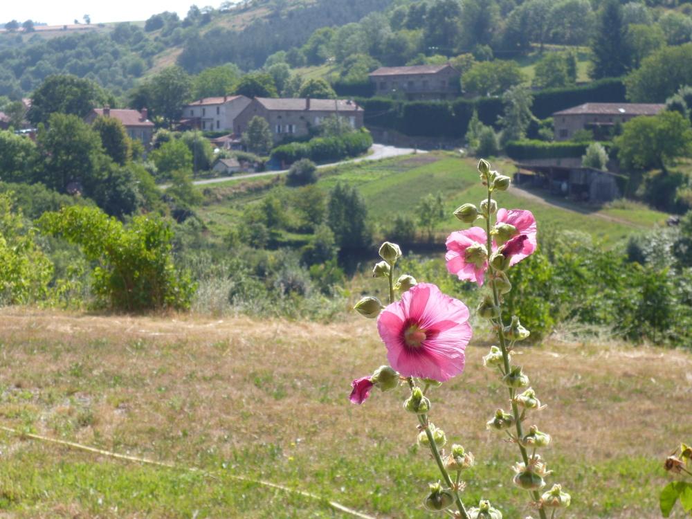 paysage verdoyant au pays basque