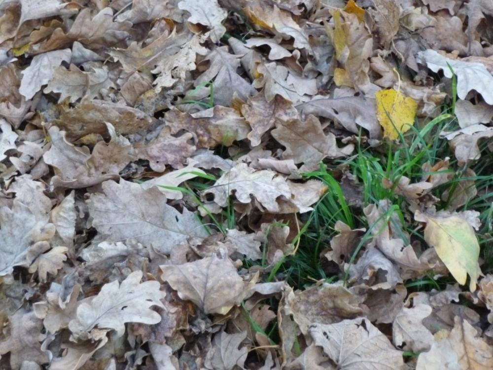 Quand l'automne est là...
