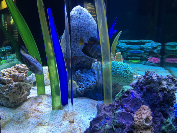 Mystic Fish Tank
