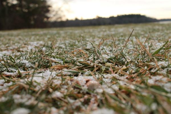 grass winter snow