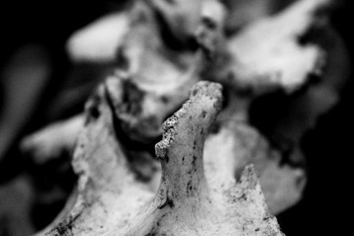 Macro 3 the bones
