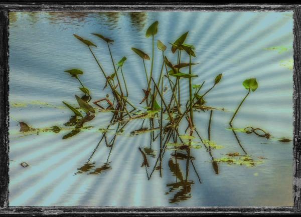 The Pond. Lakeville Massachusetts