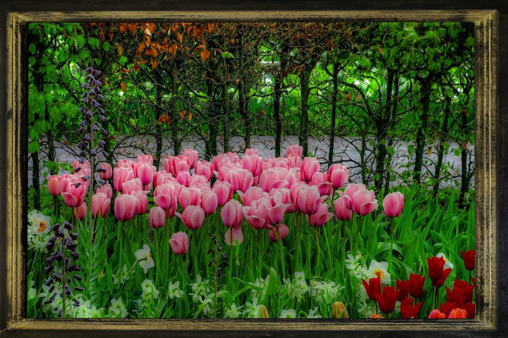 Spring Garden, Netherlands 2016