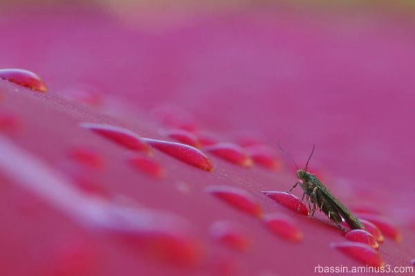 Rosée et insecte