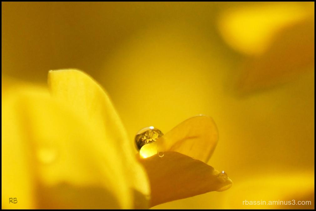 Goutte jaune
