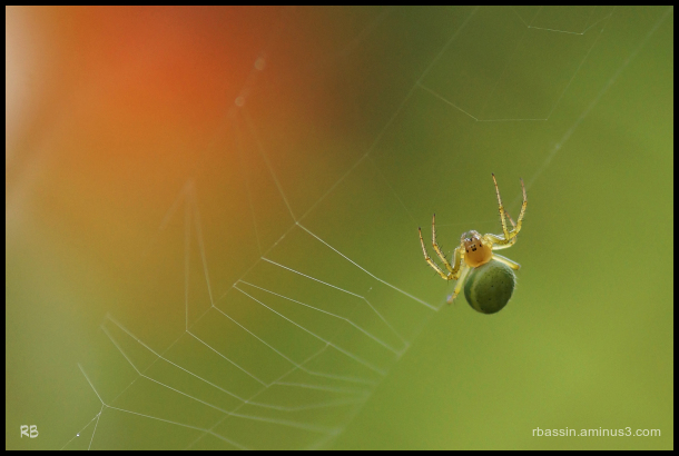 araignée # 2