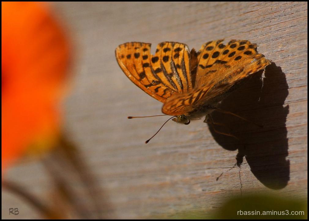 Ombre et Papillon