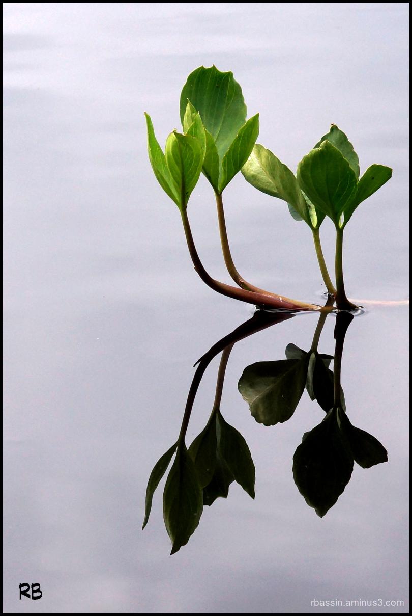 végétal # 5