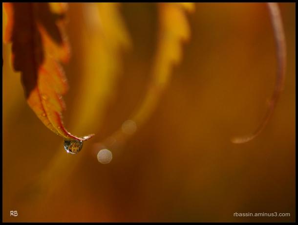 goutte d'automne