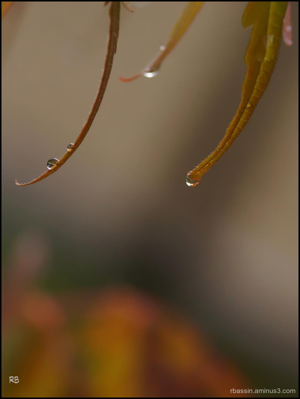goutte d'automne # 2