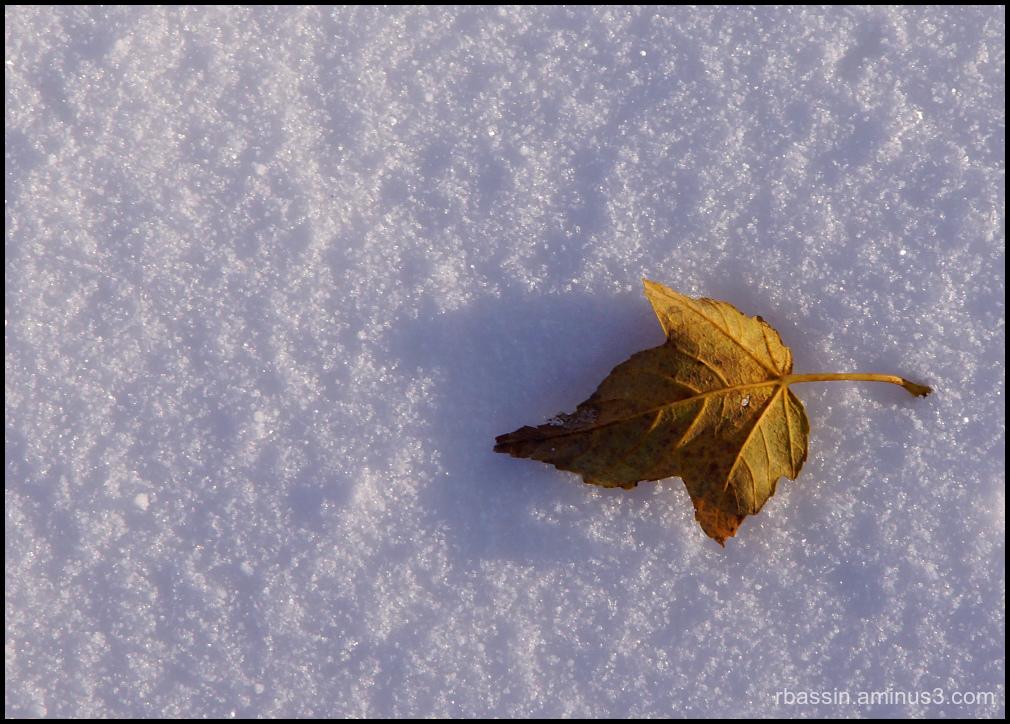 l'automne fait place à l'hiver