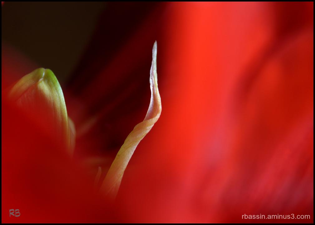 composition rouge # 2