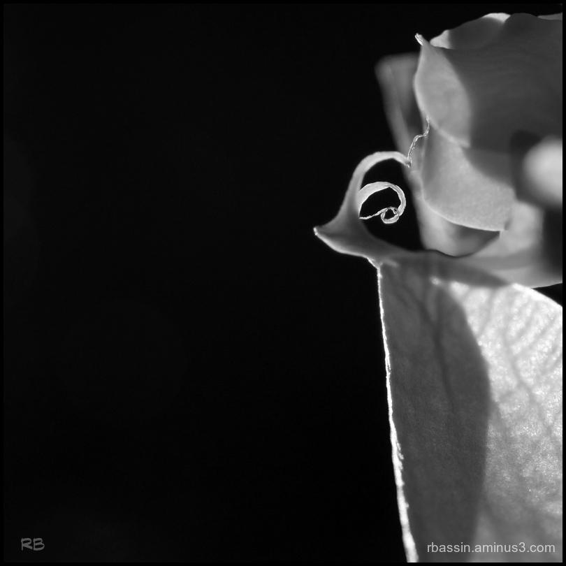 Orchidée autrement...#2