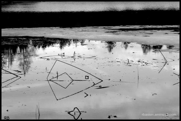 jeux de reflets sur l'étang