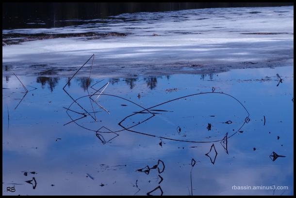 jeux de reflets sur l'étang#2