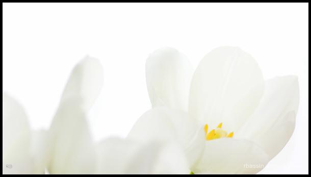 jaune et blanc