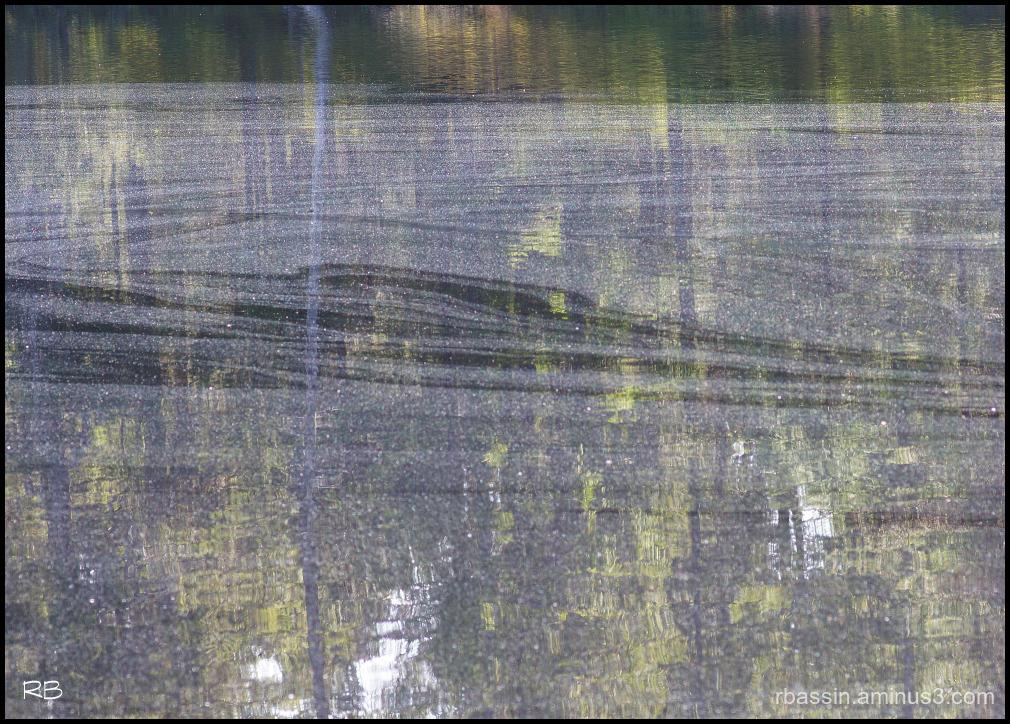 pollen sur l'étang