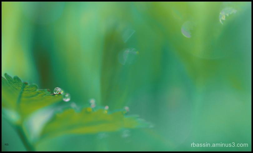 sur fond vert