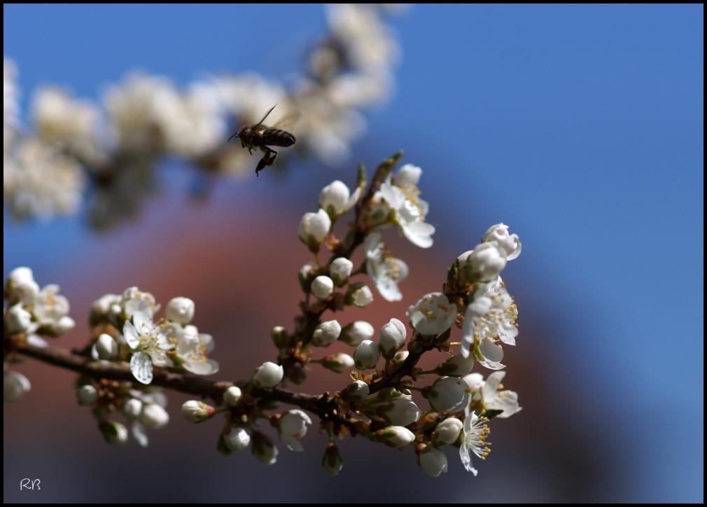 un goût de printemps # 2