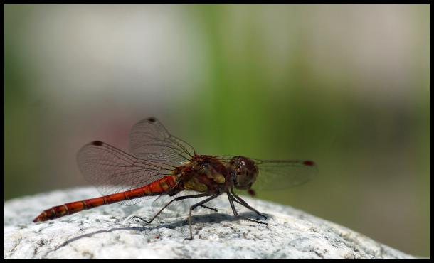 finesse des ailes