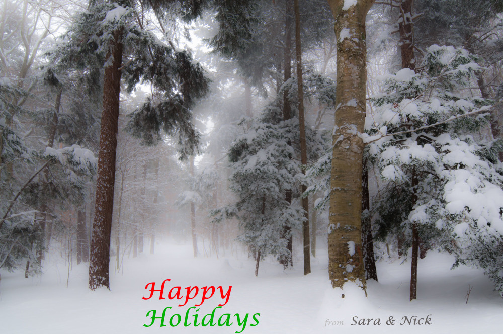 Snowy woods Christmas Card