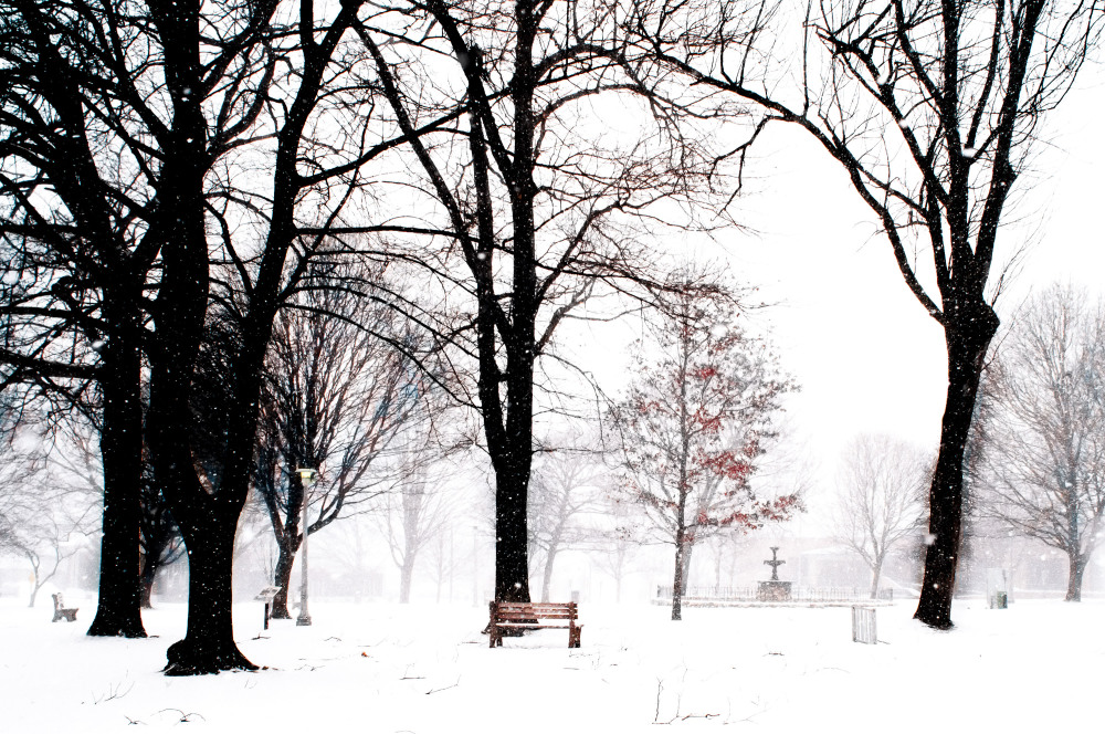 an empty city park in winter