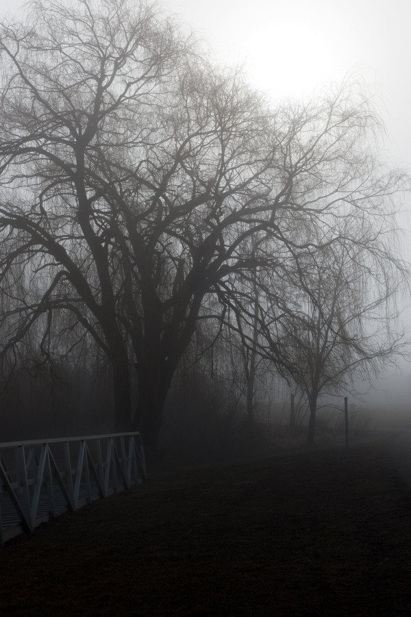 Black and white. Foggy day in the park