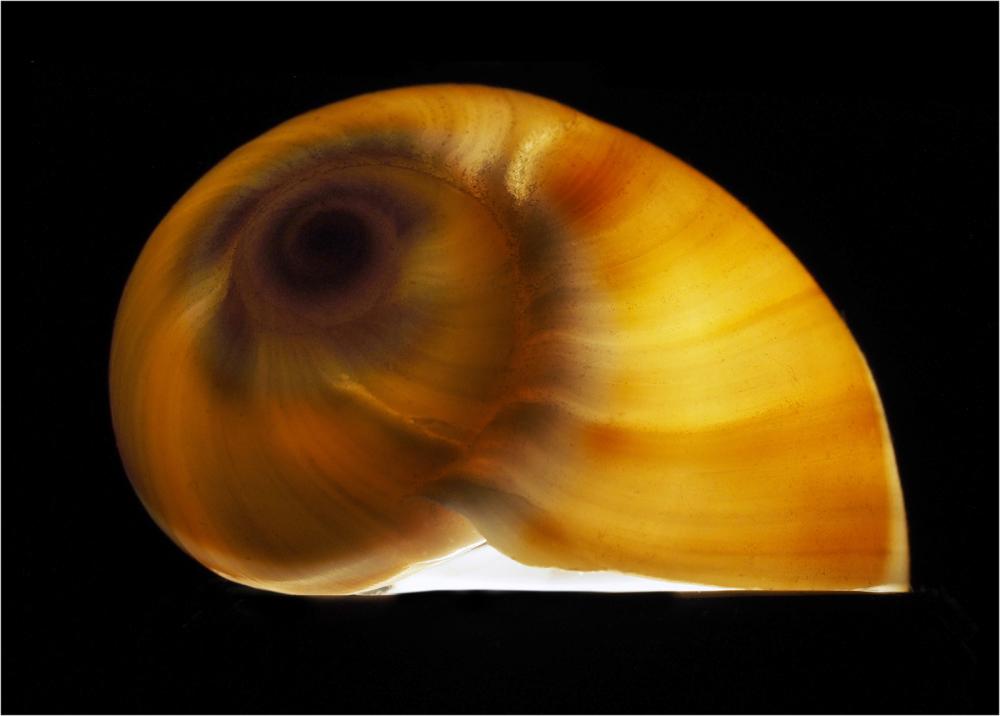 Shell Galaxy