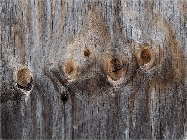 Patterns in Wood