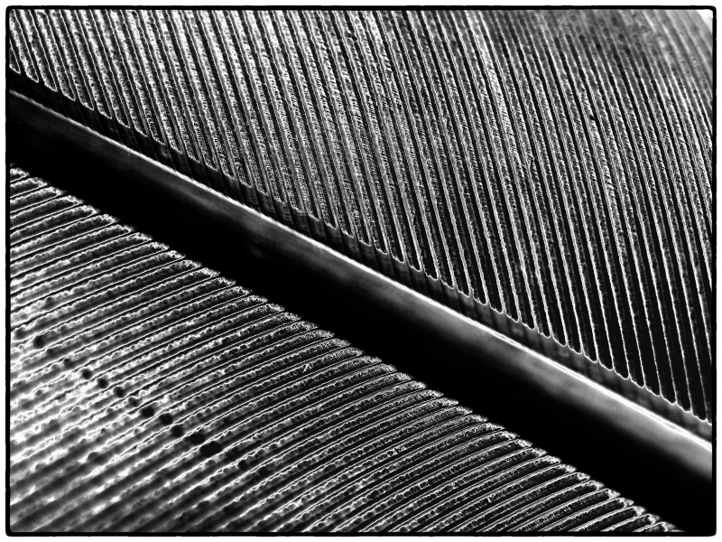 Wing Feather Detail