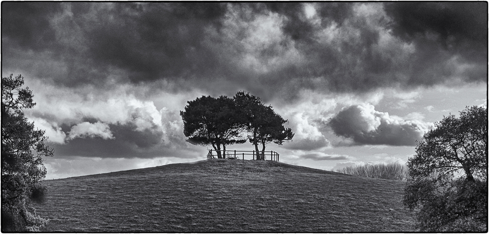Trees on Hill Top