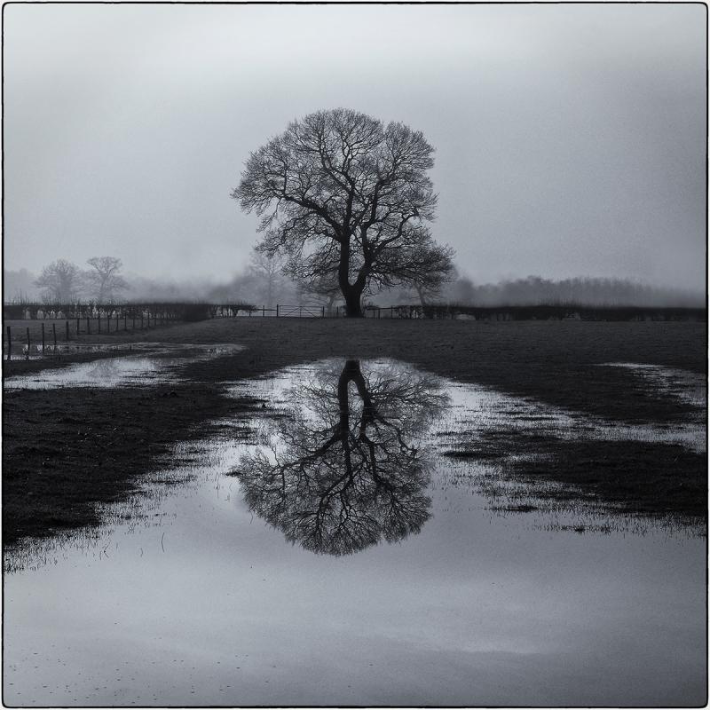Lone Tree in Mist