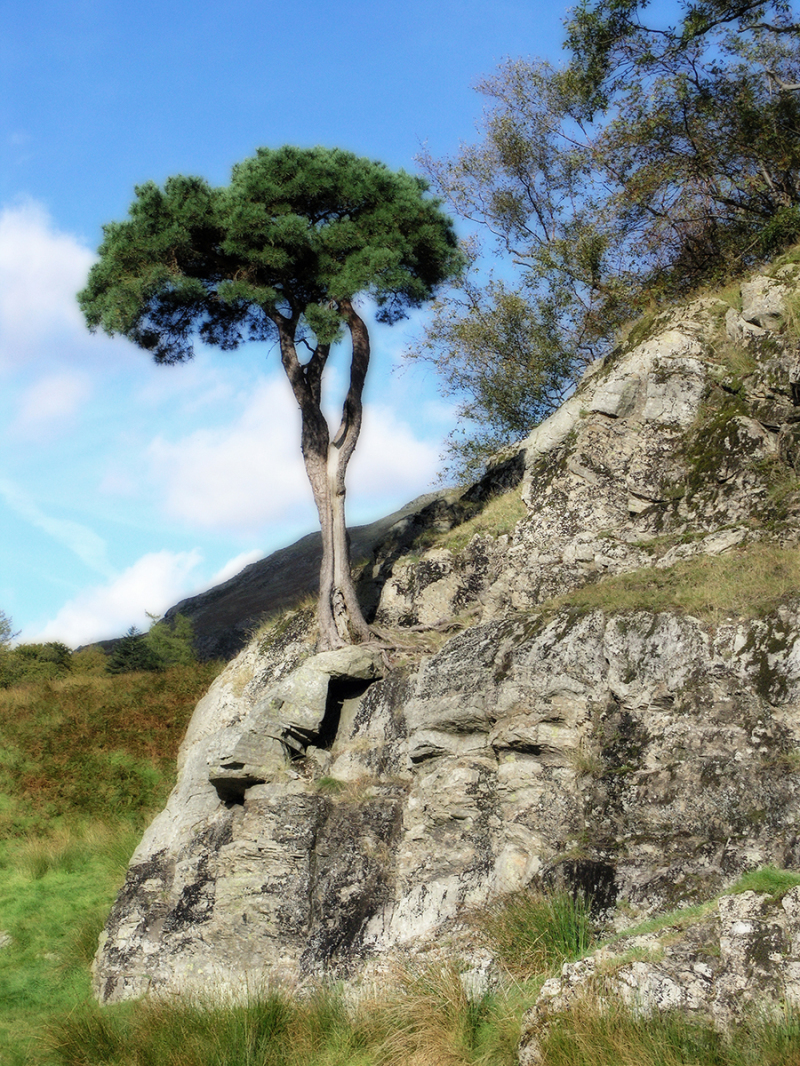 Tree on Rocky Outcrop