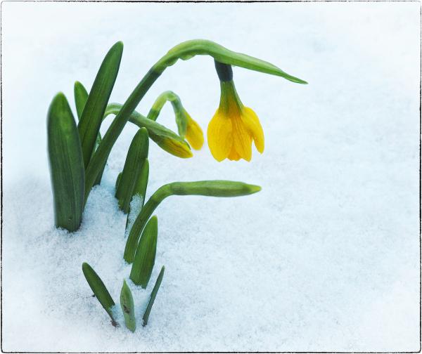 Struggling in the Snow