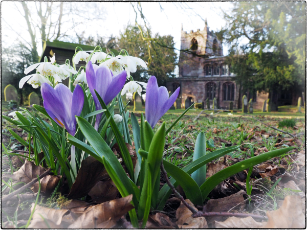 Spring in the Churchyard_4