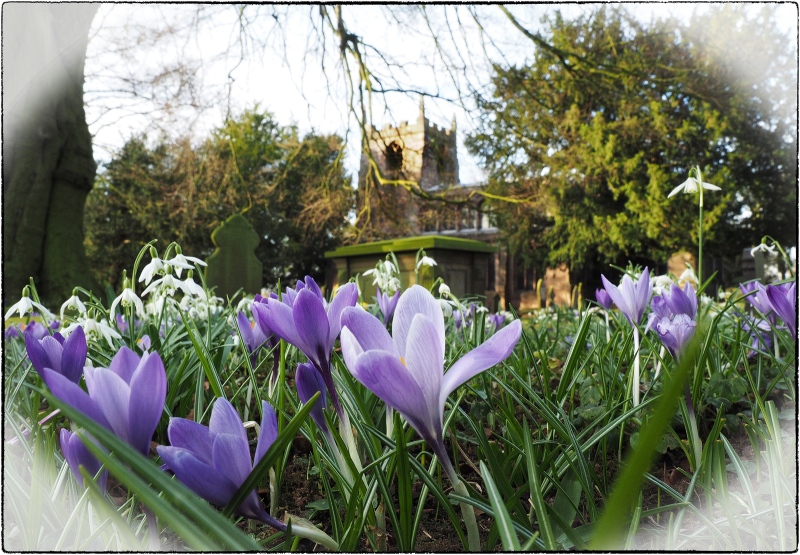 Spring in the Churchyard_5