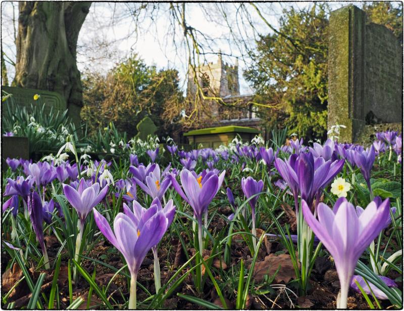 Spring in the Churchyard_2