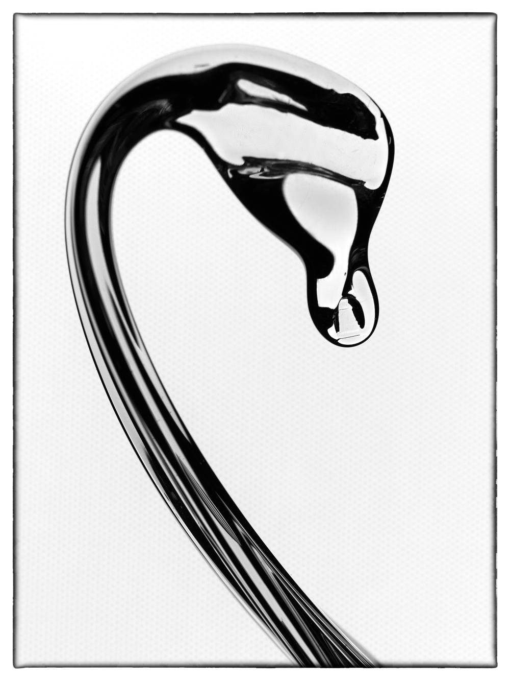 Swan Head No 4