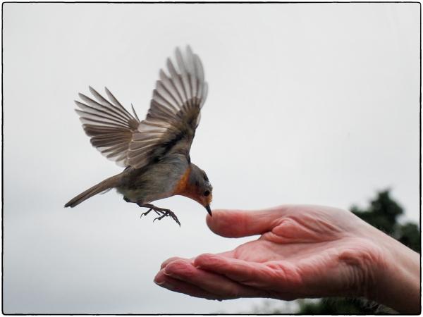 From Hand to Beak