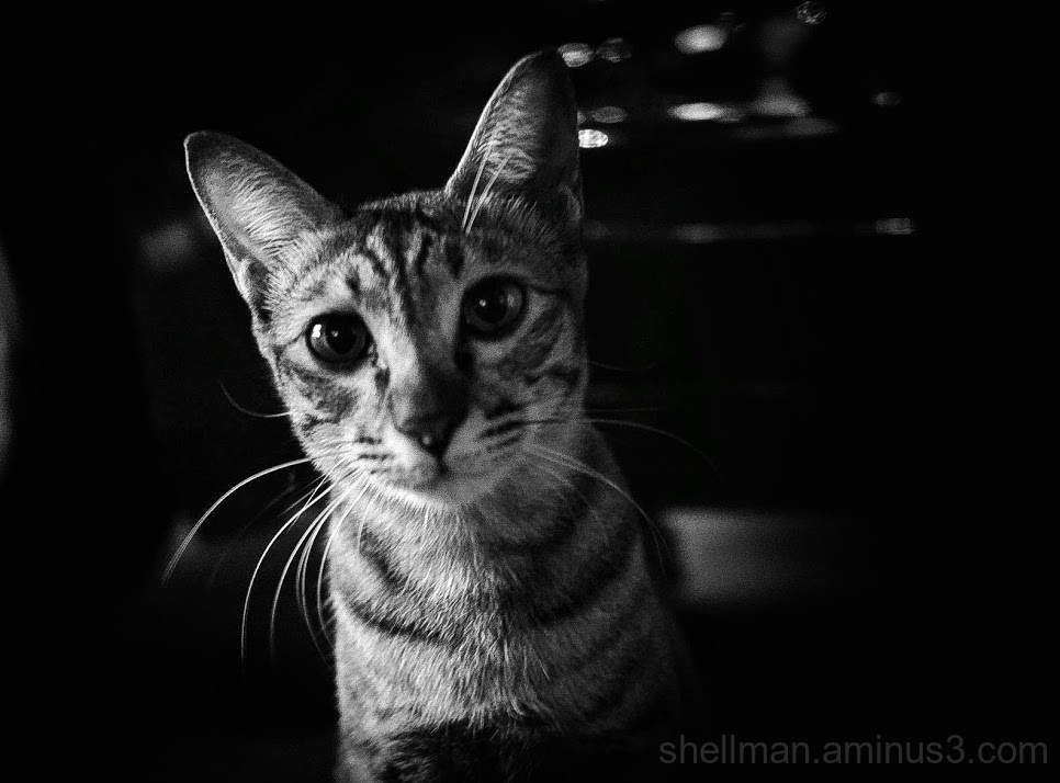 Nocturnal Feline Portraiture