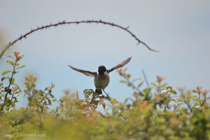 oiseaux photo